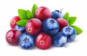 Isolated Cranberries And Blueberries poster