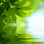 Green Leaves Reflecting In The Water, Shallow Focus