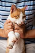 Hand Holding And Catching Naughty Cat, Pet At Home poster