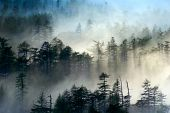 pic of fantasy landscape  - Fog forest sunlight fog season landscape mysterious the prospect - JPG