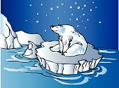 stock photo of polar bears  - Polar Bear sitting on an iceberg under the stars - JPG