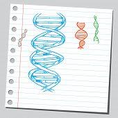 Esboçado ilustração de um DNA espirais