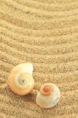 Gastropod shell on the sand