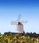 Lanzarote Guatiza cactus jardín molino de viento y nopal chumbera en Islas Canarias