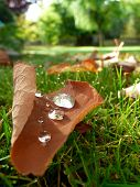 Fallen Autumn Leaves And Dew