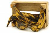 sweet ripe baking bananas (plantain bananas) in a wooden crate on a white background