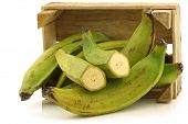picture of plantain  - unripe baking bananas  - JPG