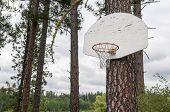 Pine Tree Basketball Hoop On A Rainy Day