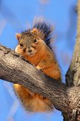 Squirrel On Tree Looking At You