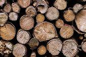 Firewood 005-130427