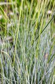 Cerrar la hierba del jardín grisáceo