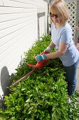 foto of electric trimmer  - Woman trimming bushes in her backyard using an electrical hedge trimmer - JPG