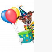 stock photo of dog birthday  - birthday dog with balloons behind a white placard - JPG
