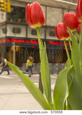 poster of City Tulips