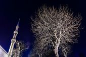 Grey Leafless Tree And A Minaret Of Hagia Sophia Mosque At Night