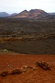 Volcanic Timanfaya  Red Rock Stone  Lanzarote Spain Plant Flower Bush