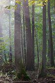 Summertime Misty Morning In Forest