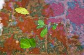 Floating Leaves In Cordoba