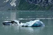 Iceberg From Tidewater Margerie Glacier, Alaska