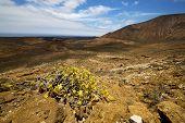 Volcanic Plant Flower Bush