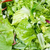 Green Leaves In Fresh Italian Lettuce Mix