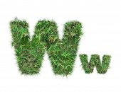 Letter W On Green Grass Isolated