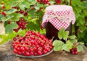 picture of jar jelly  - red currants and jar of jam in garden - JPG