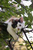 Cute Kitten Resting On The Tree Branch