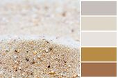 Sand background color palette with complimentary swatches.