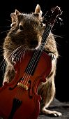 Degu Hamster Standing With Cello
