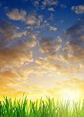 Fresh dewy green grass at sunrise