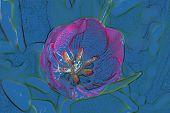 Stock Image Of Tulip Art