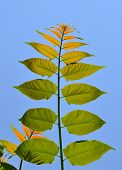 Green leafs unter dem blauen Himmel