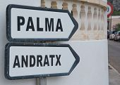 picture of elm  - Road sign Palma Andratx - JPG