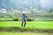 foto of southeast  - Vietnamese farmer works at rice field at foggy morning - JPG