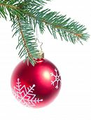 christmas tree ball hanging from spruce isolated on white background