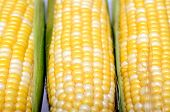 Three Fresh Sweet Corns