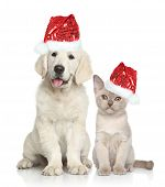 picture of golden retriever puppy  - Cat and dog in Santa red hat - JPG