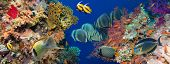 stock photo of aquatic animal  - Colorful underwater offshore rocky reef with coral and sponges and small tropical fish swimming by in a blue ocean - JPG