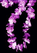 stock photo of hawaiian flower  - various colored flower leis on black background - JPG
