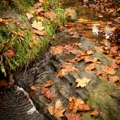 Fall Colores, Water And Brown