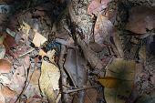 Borneo Ants