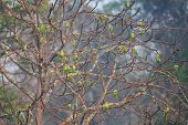 image of pecker  - A group of blossom headed parakeets sitting on a tree - JPG