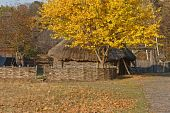 Autumnal View. Hut With Thatched Roof. Wattle. Beautiful Tree With Yellow Leaves.