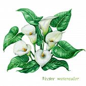 picture of calla lily  - Bouquet of watercolor white calla lilies with green leaves - JPG
