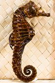 stock photo of embalming  - real brown stuffed sea horse - JPG