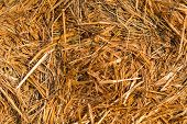 pic of hay bale  - Piled hay bales on a field at sunset time - JPG
