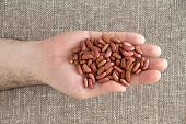 stock photo of phaseolus  - Man displaying a handful of whole dried red kidney beans rich in protein dietary fiber and fat free over a beige textile background view from above - JPG