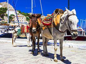 image of hydra  - Traditional Greece  - JPG