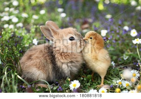 Best friends bunny rabbit and